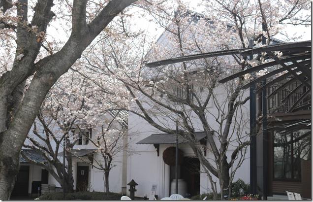 NishinomonSakura