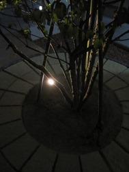 Shinborutsurī Raitoappu