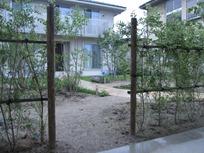 シルバープリペットの生垣