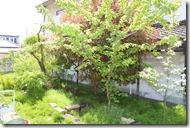 木が生茂る庭