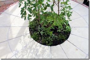 ブラッドストーンサークルの中の植栽