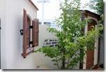 Dea's garden Canna Cute & patio wall c 5052
