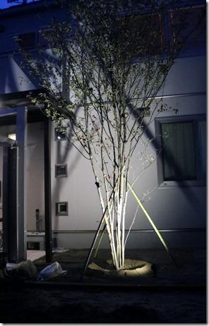 庭に植えたシンボルツリーのヤマボウシ株たちライトアップ