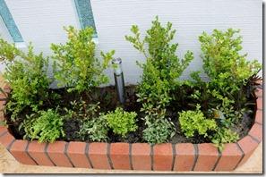 門柱前の花壇の植栽