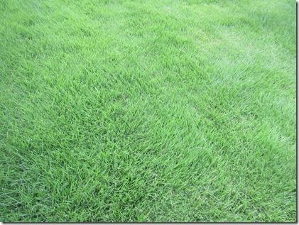 sibafu green