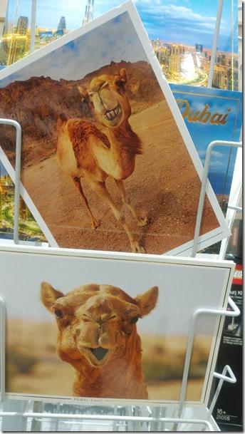 rakuda camel