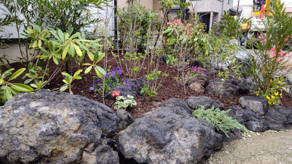浅間石 植栽
