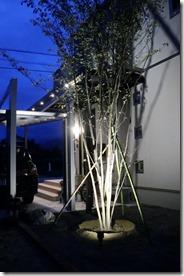 シンボルツリーのライトアップ