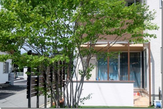 NiwaShinborutsurī Momiji 3890