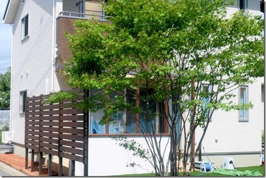 Terasu cocomaⅡ mekakushi 3889